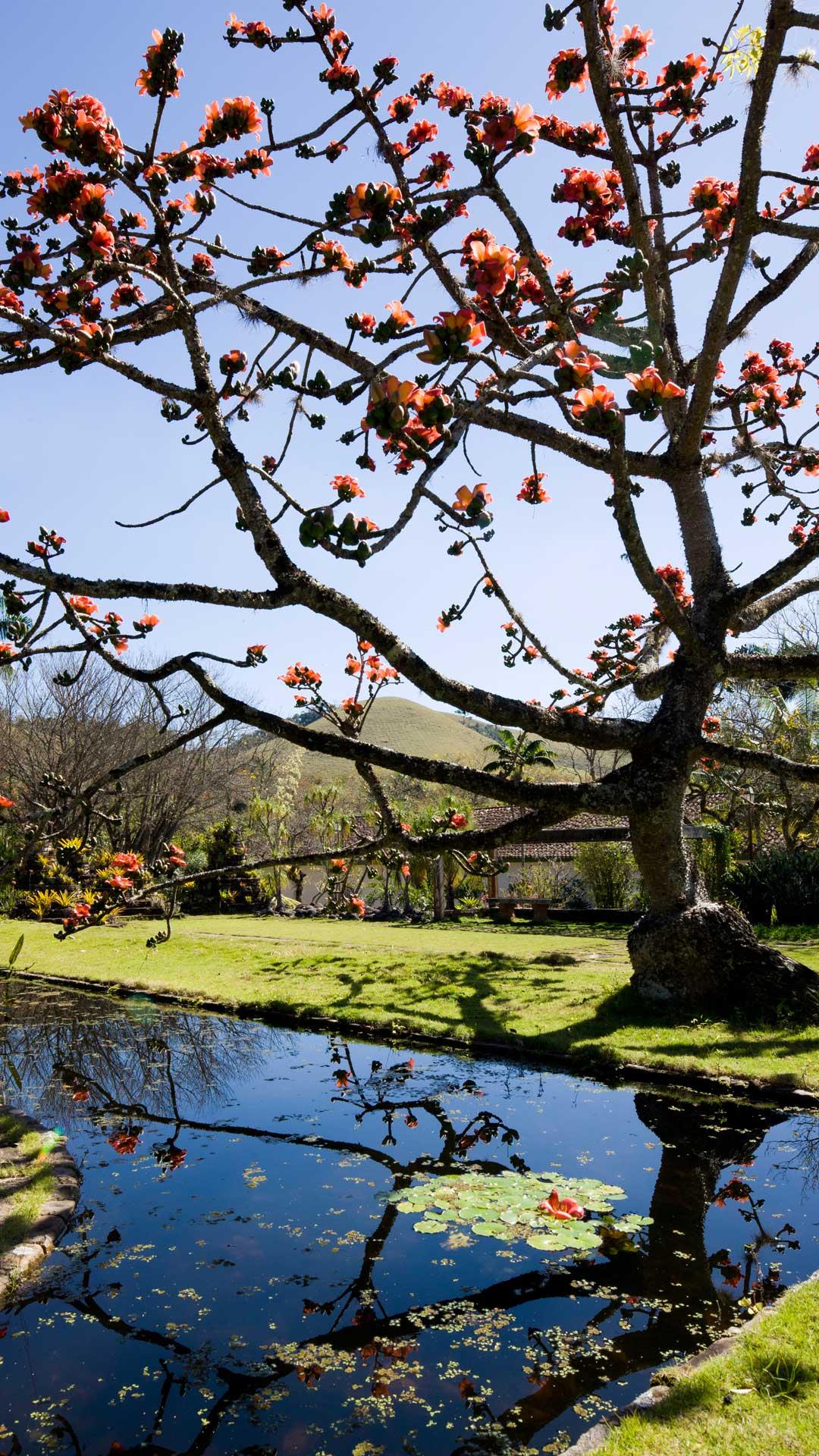 Fotografia de Filippo Bamberghi Fazenda Vargem Grande - Jardim Roberto Burle Marx - Areias/SP