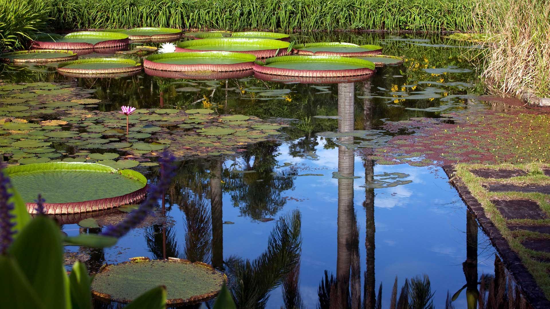Fotografia de Leonardo Finotti Fazenda Vargem Grande - Jardim Roberto Burle Marx - Areias/SP